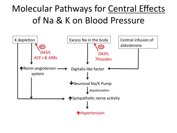 hypertension_pathophysiology [TUSOM | Pharmwiki]