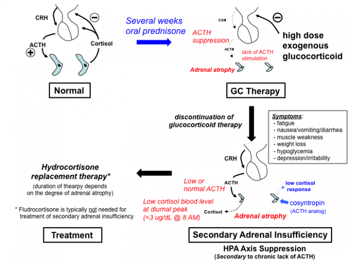 glucocorticoid_pharmacology [TUSOM | Pharmwiki]