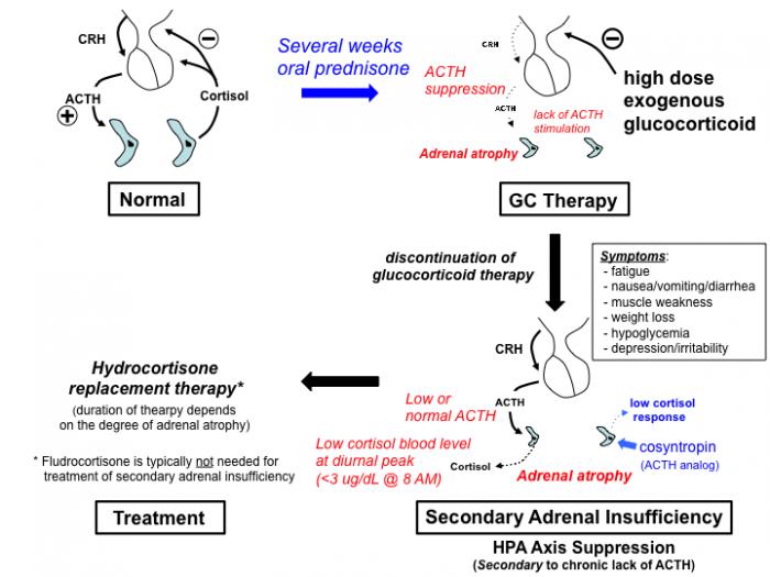 Steroid adrenal suppression russia steroids
