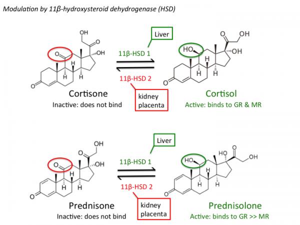 Allsteroiddrugs Tusom Pharmwiki