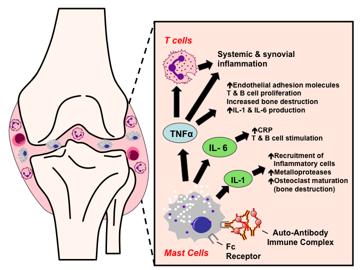 Rheumatoid Arthritis Tusom Pharmwiki