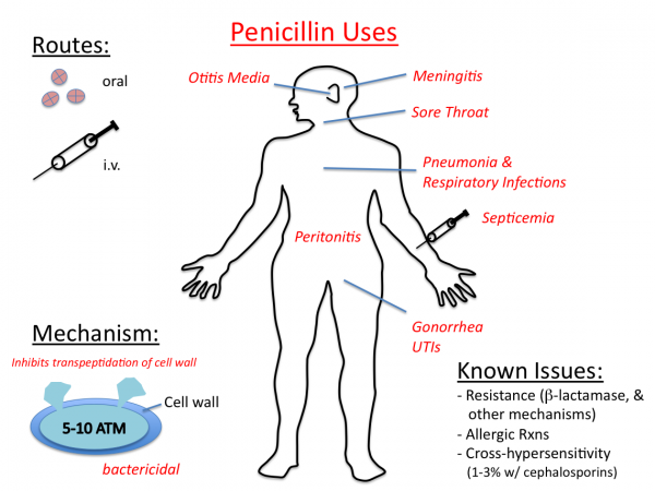 Image result for penicillins