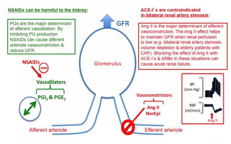 Ace Inhibitor Pharmacology Tusom Pharmwiki