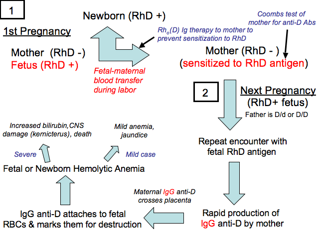 hemolytic_disease_of_the_newborn [TUSOM